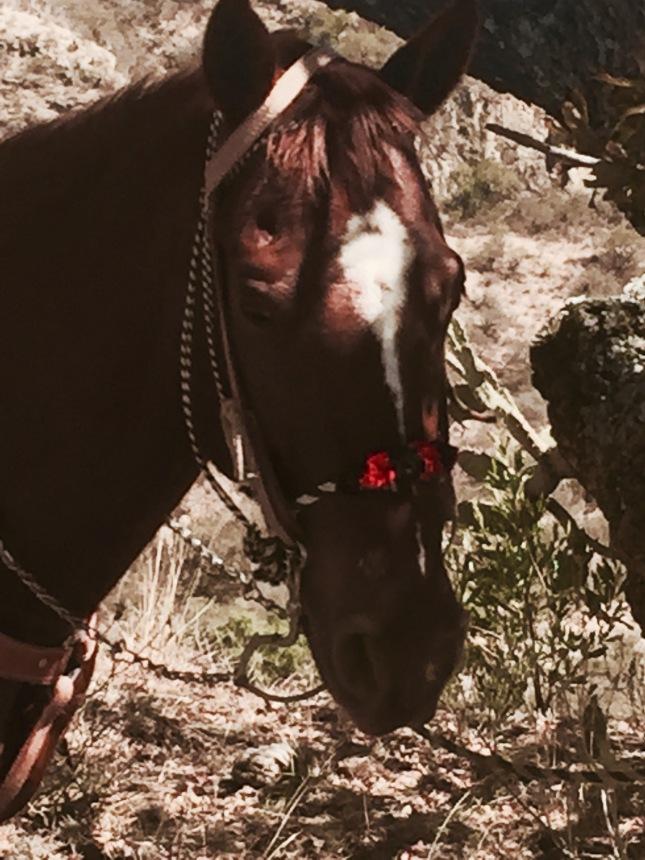 san-m-horse-3